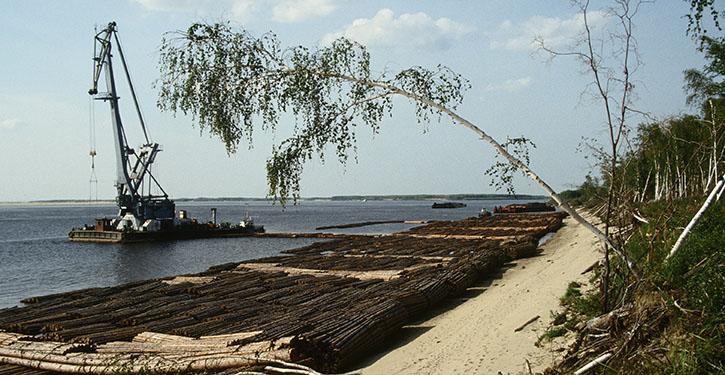 Baumstämme werden auf der Lena stromabwärts geflößt.